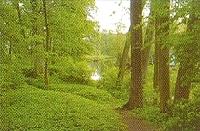 Zdjęcie natury